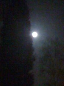 Sterrebeek Moon