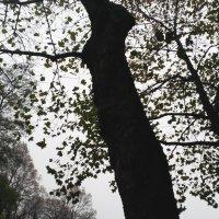 Tree 6. L'arbre qui ne voulait pas mourir